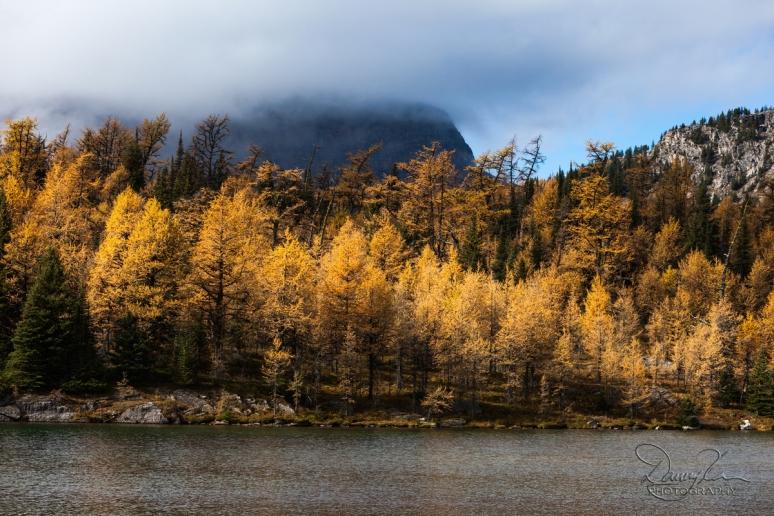 Rockies 2014